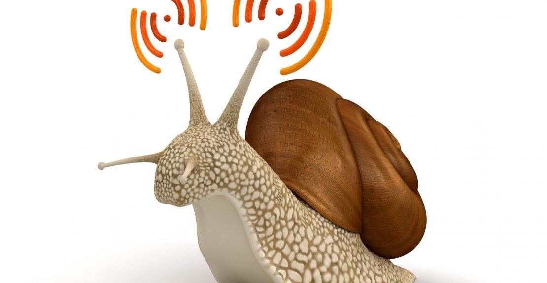 Wi-Fi Snail